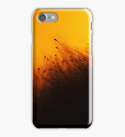 Cane seeds iPhone Case/Skin