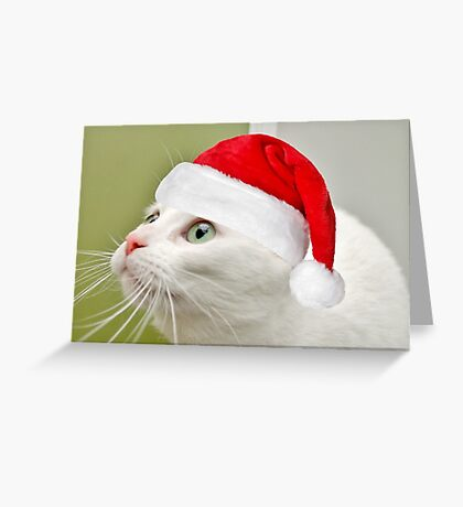 Sophies Home For Christmas Greeting Card