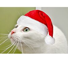 Sophies Home For Christmas Photographic Print