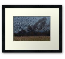 Starling Roost! Framed Print