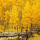 Aspen with aspen by Linda Sparks