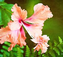 Showy Hibiscus Amid the Greenery by Anita Pollak