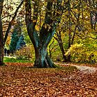 Blue velvet trees by © Kira Bodensted