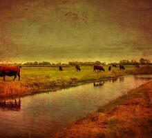 Cows On The Marsh by Dave Godden