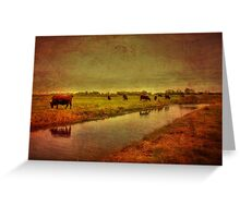 Cows On The Marsh Greeting Card