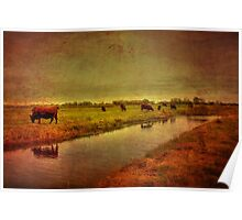 Cows On The Marsh Poster