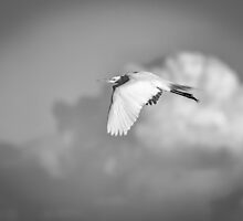 Great Egret In Flight Black And White by Thomas Young