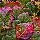 Blushing leaves by © Kira Bodensted