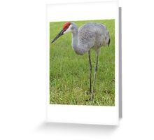 Front yard Sand Hill Greeting Card