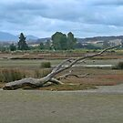 Fallen Tree by Sharon Brown