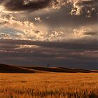 Stormy Wheat - Horsham - Victoria by James Pierce