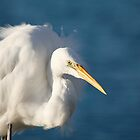 Horatio the Heron by Mark Williamson