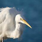 Horatio the Heron by Mark Williamson
