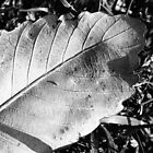 Leaf by Chris Mander