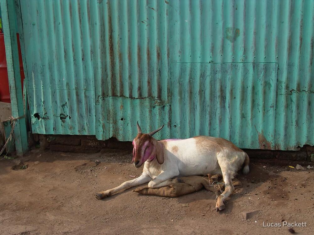 Bombay - Slum Goat by Lucas Packett