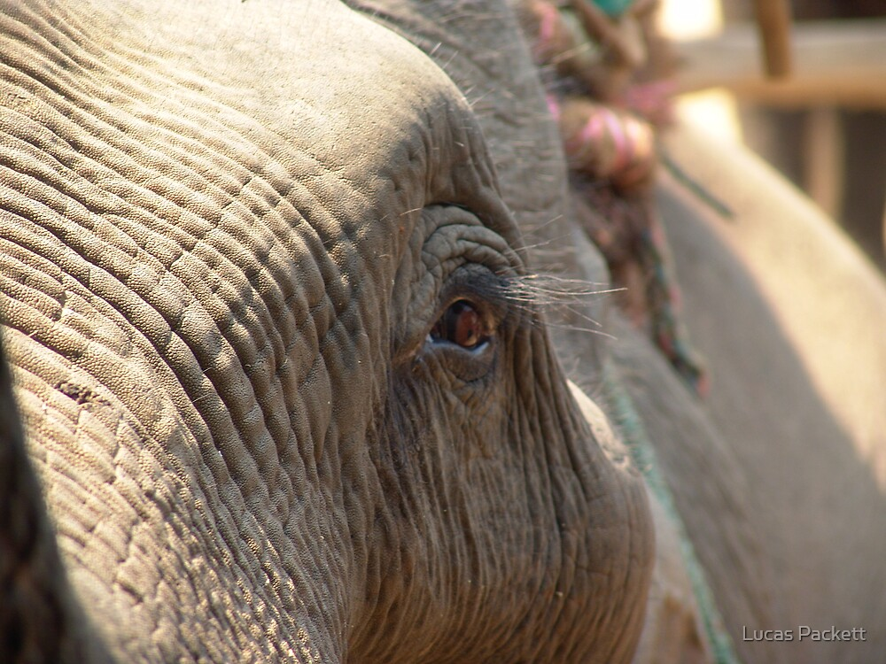 Chiang Rai, Thailand, Handi the Elephant by Lucas Packett