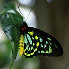 flutter by Scott Sandars