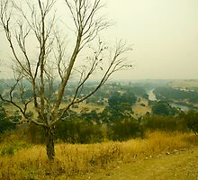Where's There's Smoke, There's a Bloody Big Bushfire. by Tim Heraud