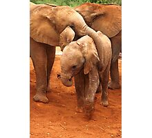 Affectionate Playmates: Baby Elephants Photographic Print