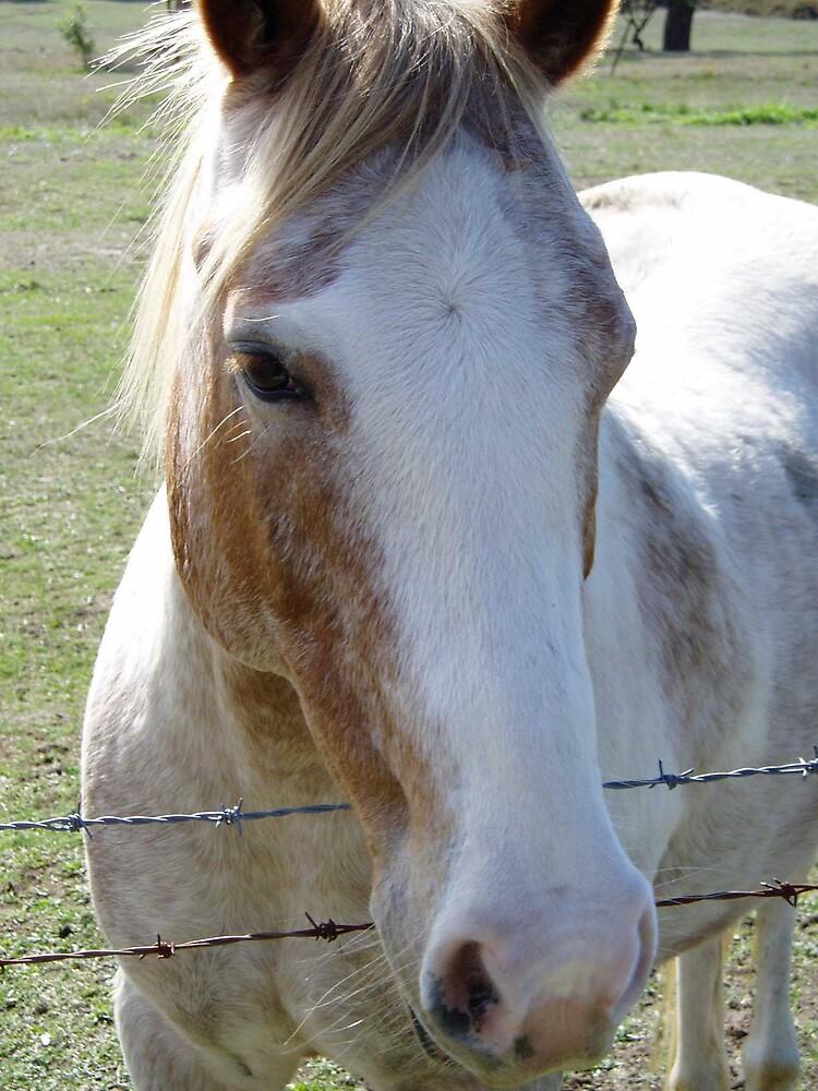 Horse by HamRadio