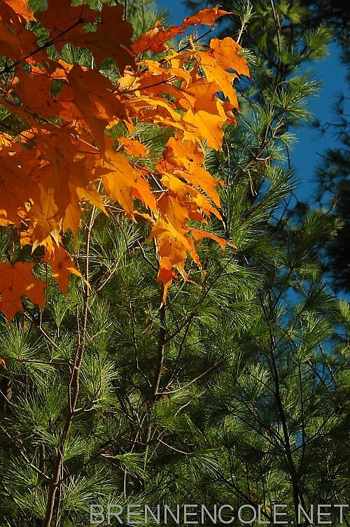 fall tree by Brennen Cole