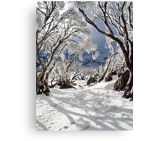 Snowgums Canvas Print