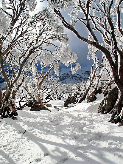 Snowgums by David Sundstrom