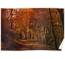 Autumnal Path Poster