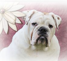 White English Bulldog with Flower by klh0853