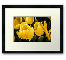 LARGE TULIPS Framed Print