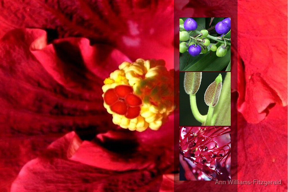 Hibiscus Vision by Ann Williams-Fitzgerald
