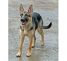 A Dog Called Sheba Photographic Print