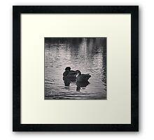 Ducks in Central Park Framed Print