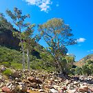 Dry Riverbed, Brachina Gorge, Flinders Ranges, South Australia. by johnrf