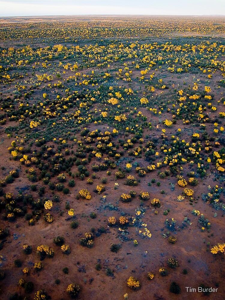 Desert Sunrise by Tim Burder
