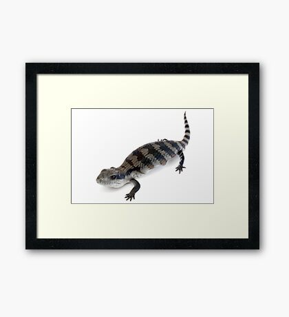 Bluetongue Framed Print
