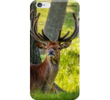 Red Deer Stag iPhone Case/Skin