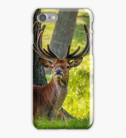 Red Deer Stag iPhone Case/Skin