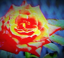 Front porch rose by ♥⊱ B. Randi Bailey
