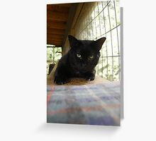 House Panther Greeting Card