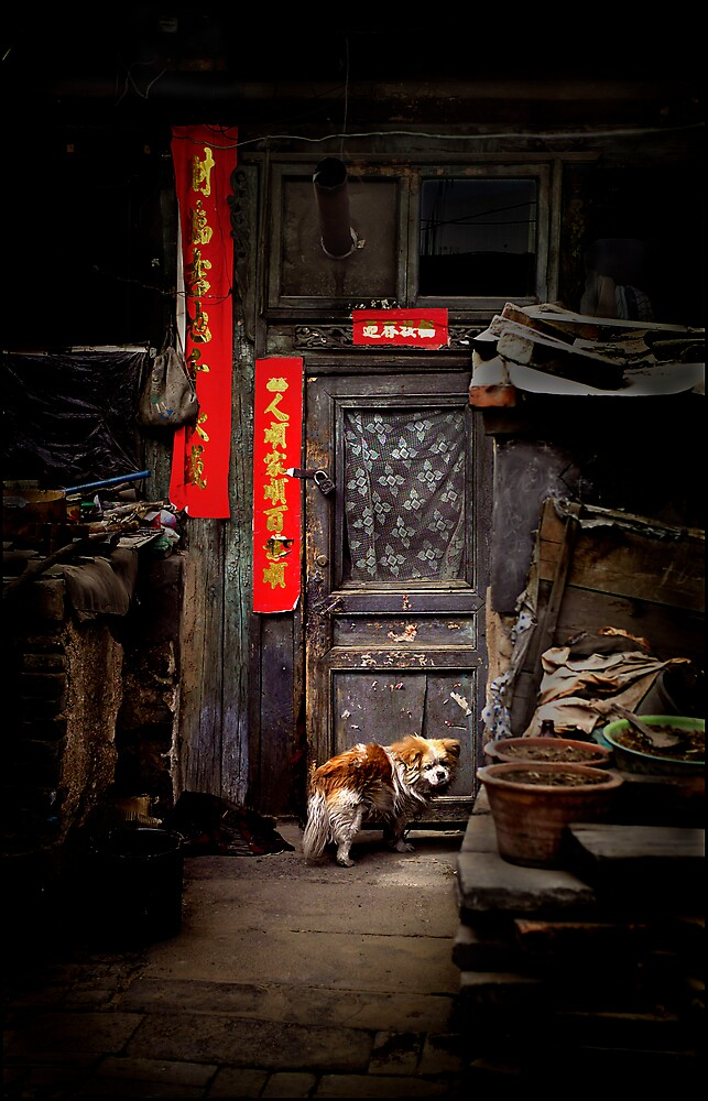 Dog at the door, Datong, China 2006 by John Tozer