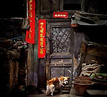 Dog at the door, Datong, China 2006 by John Tozer