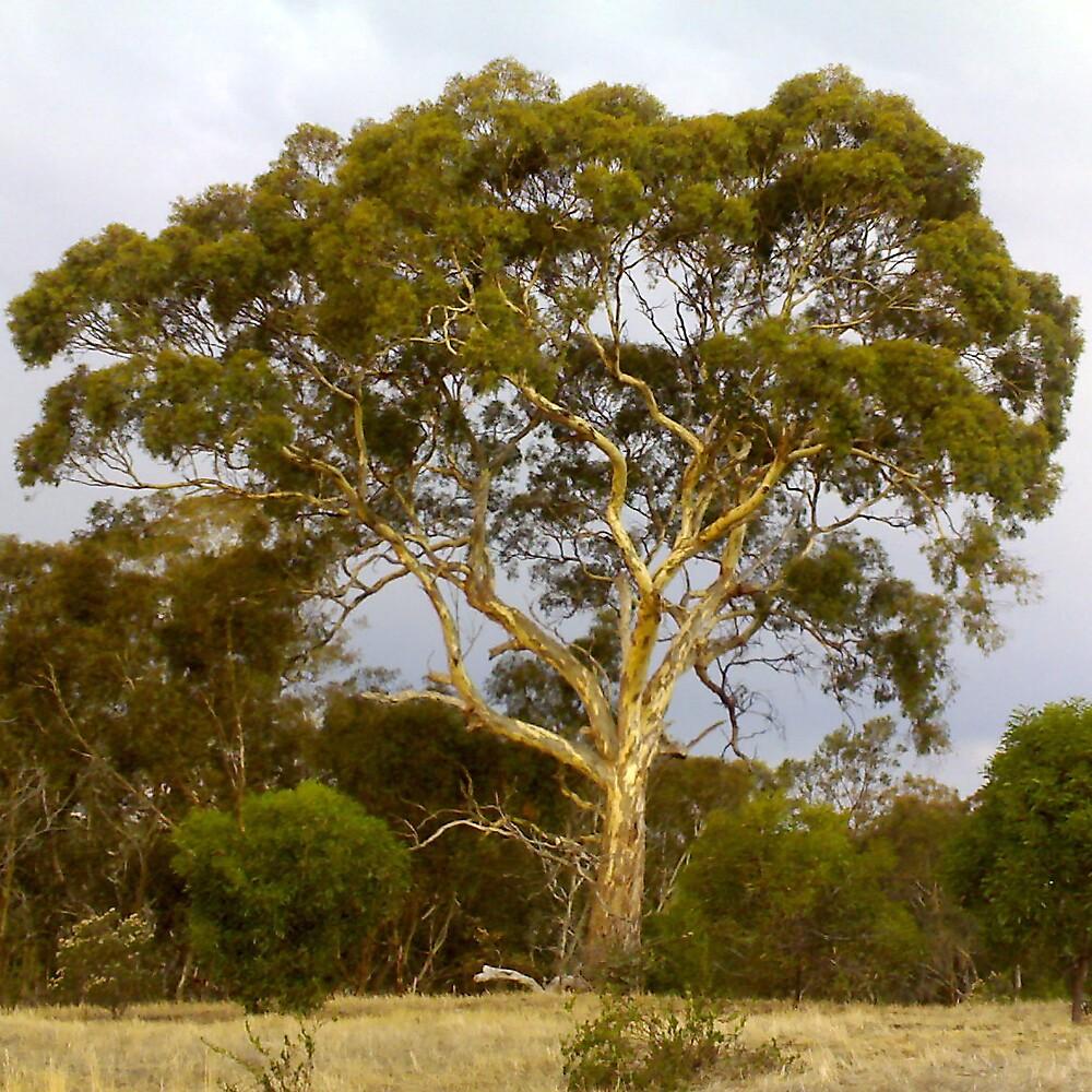 Tree Grey by J K Scott