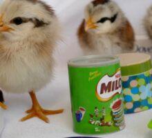 Let's Shop Till We Drop - Chicks - NZ Sticker