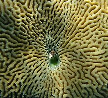 Coral by Wormfish