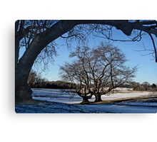 Cherry Trees in Winter Canvas Print