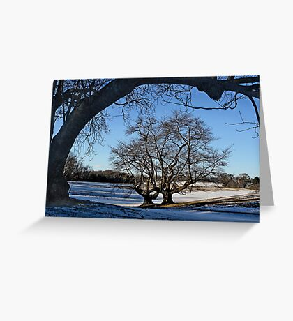 Cherry Trees in Winter Greeting Card