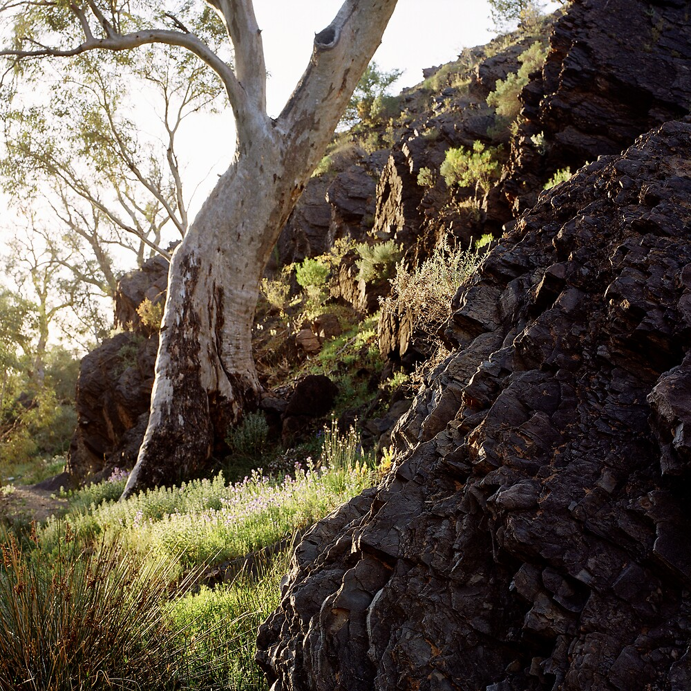Parachilna Gorge, Flinders Ranges by mgimagery