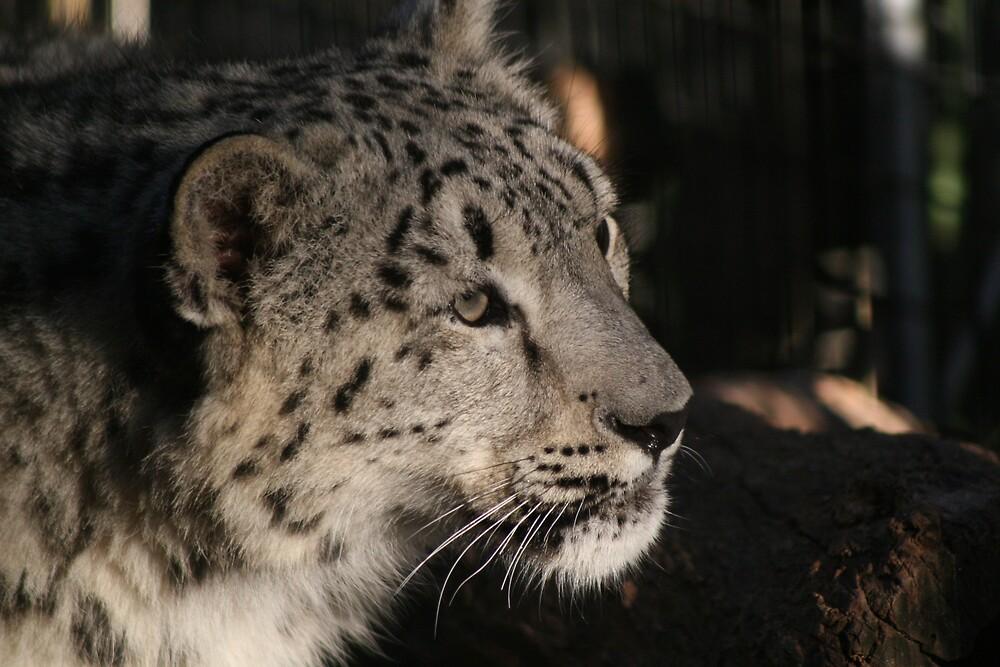 Snow Leopard 1 by John Clarke