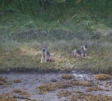 Wolves by John Clarke